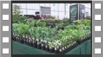 Our display at Gardeners' World 2016